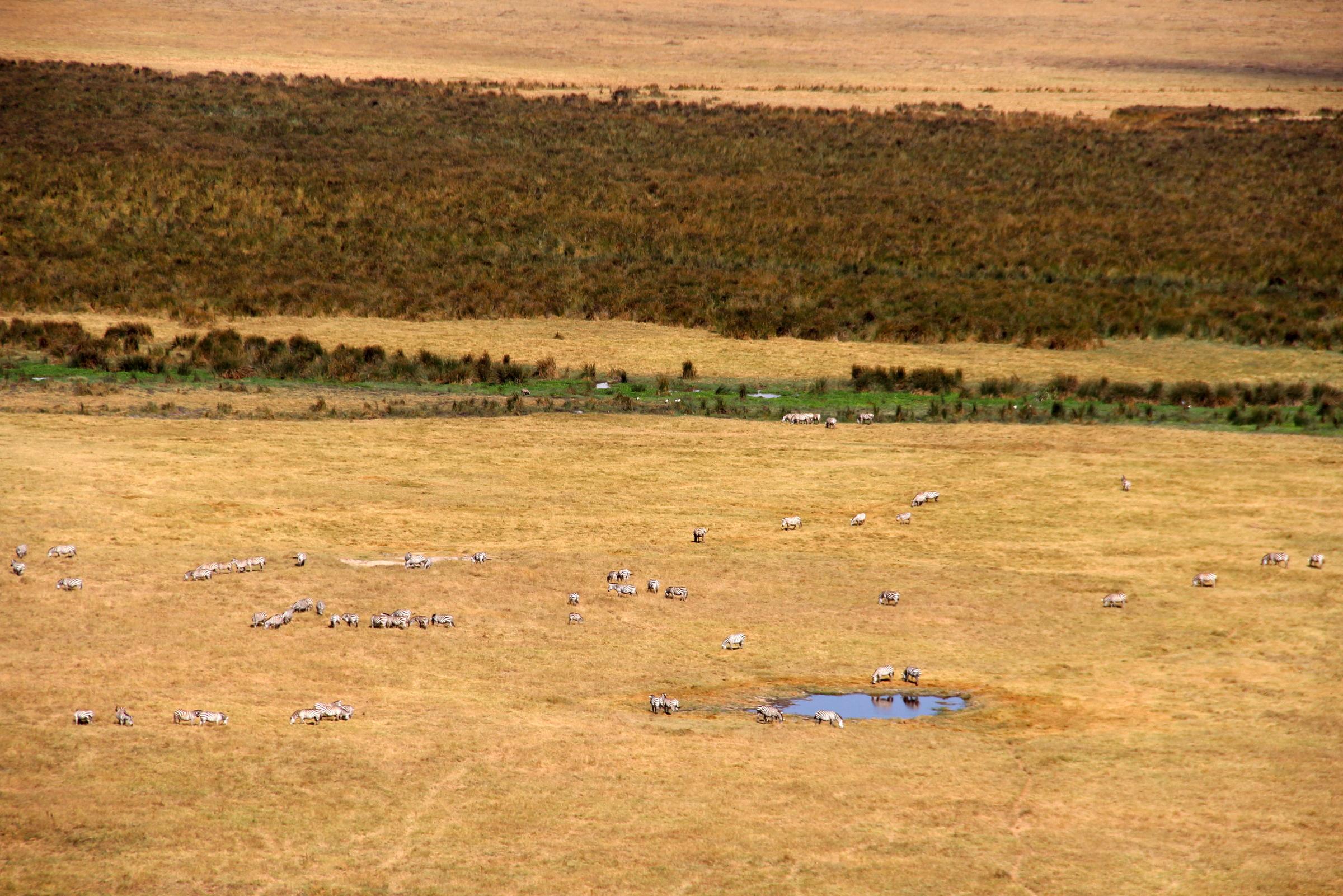 A Garden of Eden called Ngorongoro – Bona Travels
