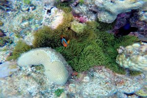 03-235-08-amazing_holmes-reef
