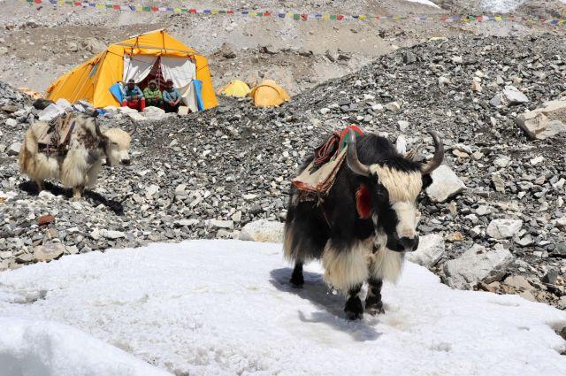201904-5 Nepal (87)